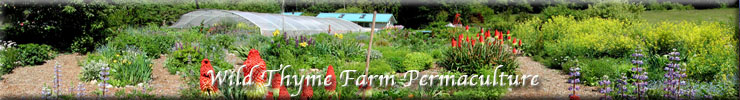 Wild Thyme Farm Permaculture